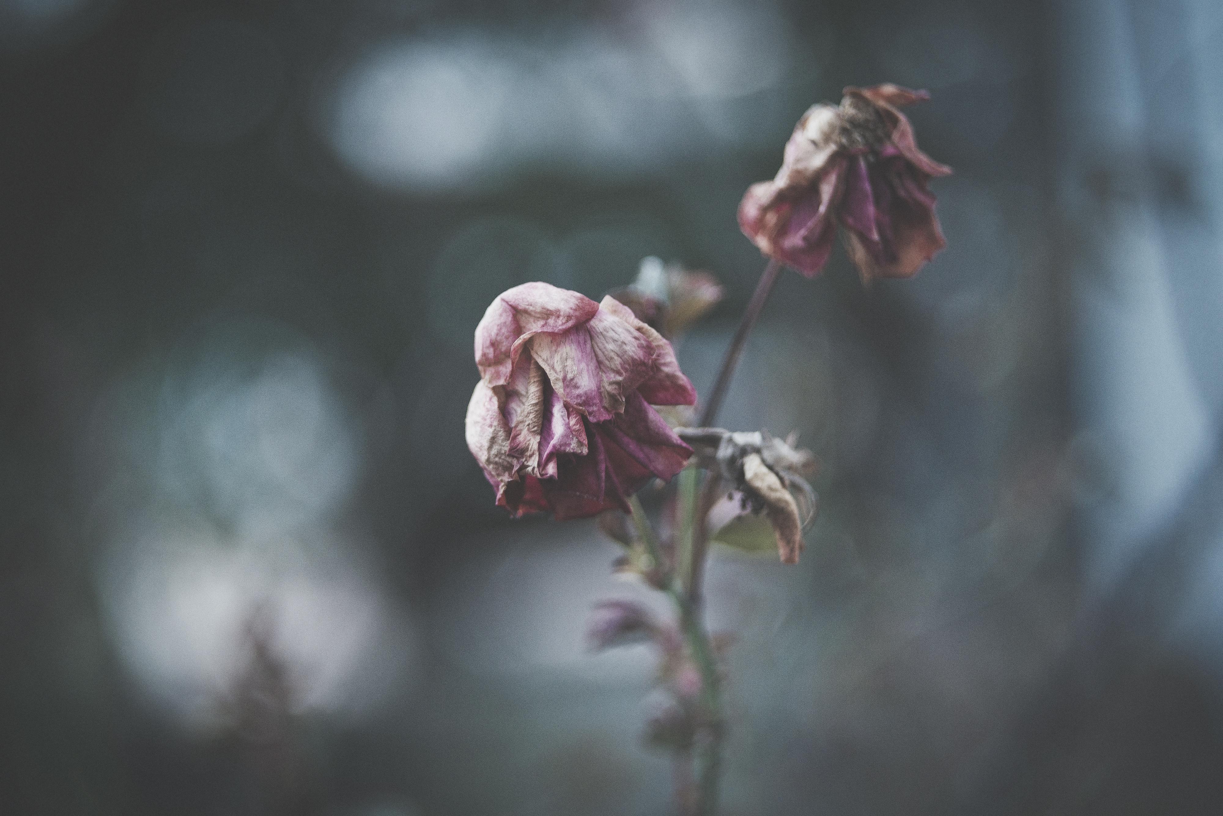 съемке цветы завяли картинки того, они